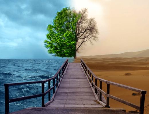 Жизнь. Сезоны. Море и пустыня